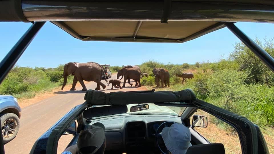 Activities at Mvuradona Safari Lodge Game Drives in Kruger Park